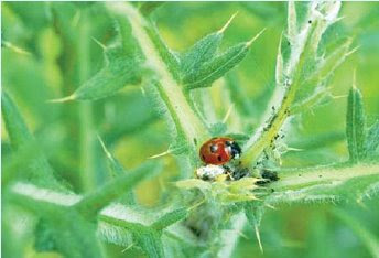 NAMC montessori classroom nature walk ladybug