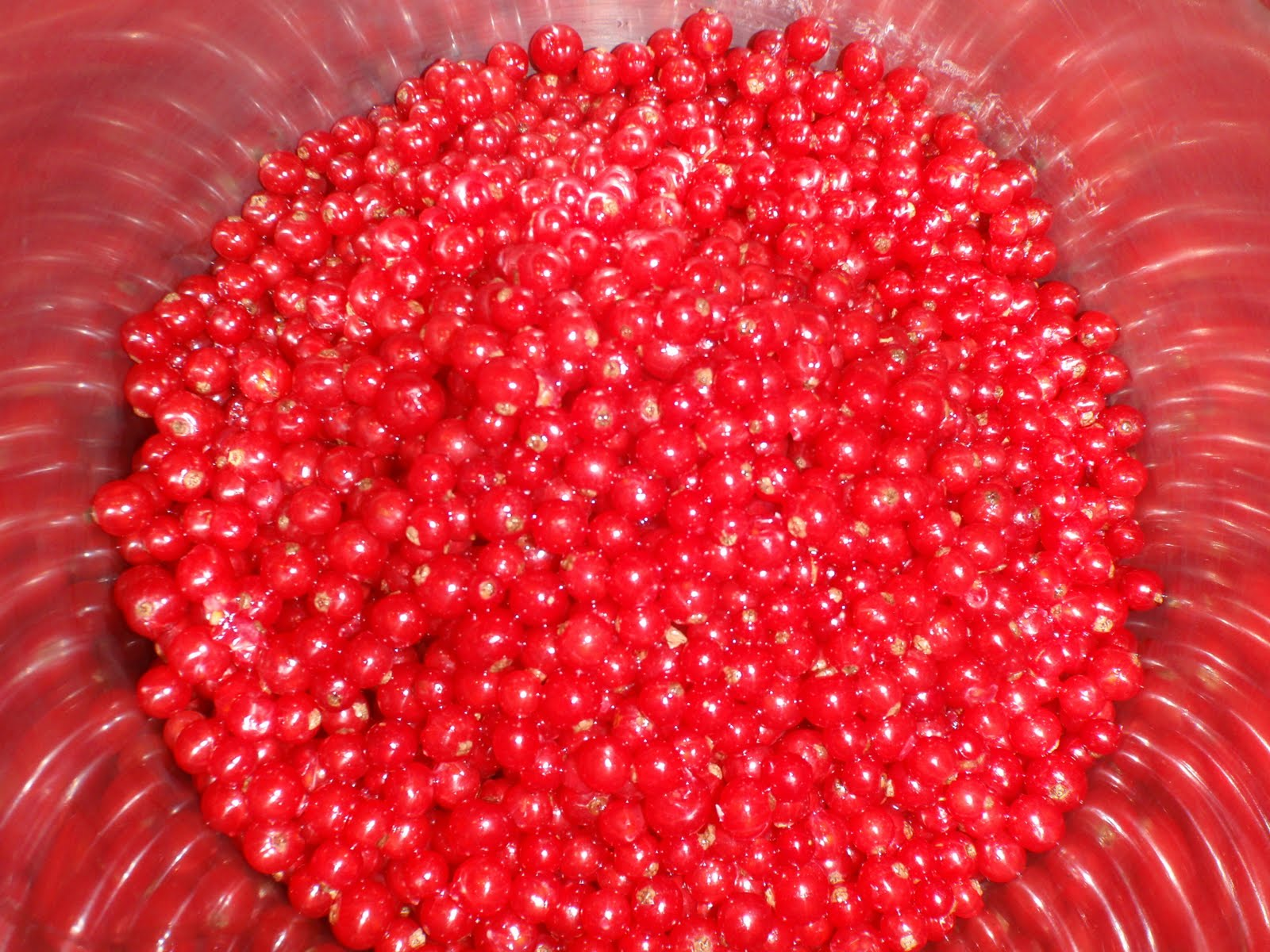 red currant jam 1 pound red currants stemmed and washed
