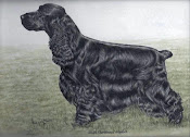 THE TOP WINNING BLACK COCKER SPANIEL  DOG OF ALL TIME IN THE UK