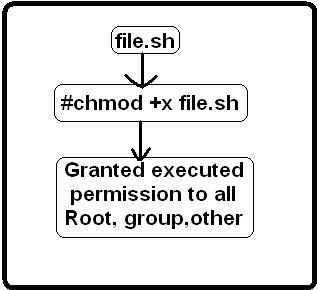 Execute permission bash script file
