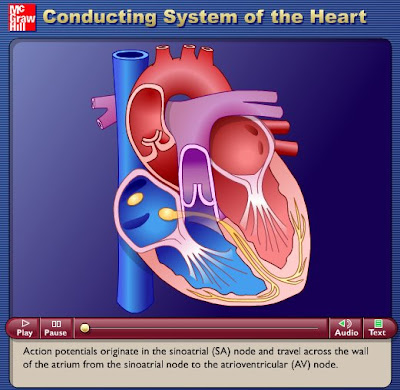 simple heart diagram for kids. simple circulatory system