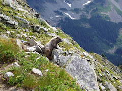 Marmot enjoying the view