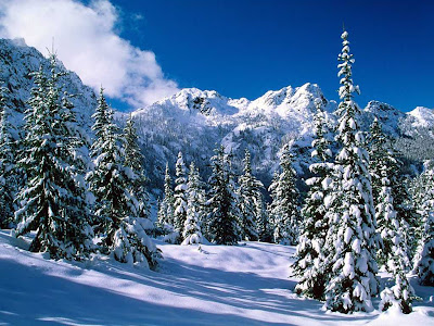 snow wallpapers. Quality Wallpapers | High