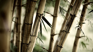 Fresh Bamboo Plants 2011 Nature Macro Photography HD Wallpaper