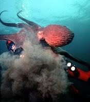 [octopus+ink.jpg]