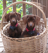 Hershey & Millie