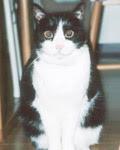 先代猫:ちょび(うなぎねこ)