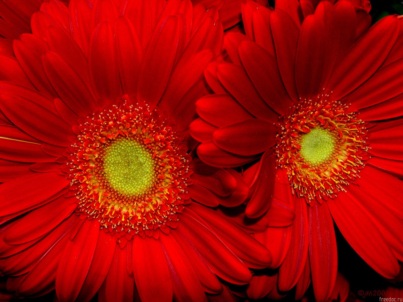 wallpapers of flowers download wallpapers of flowers