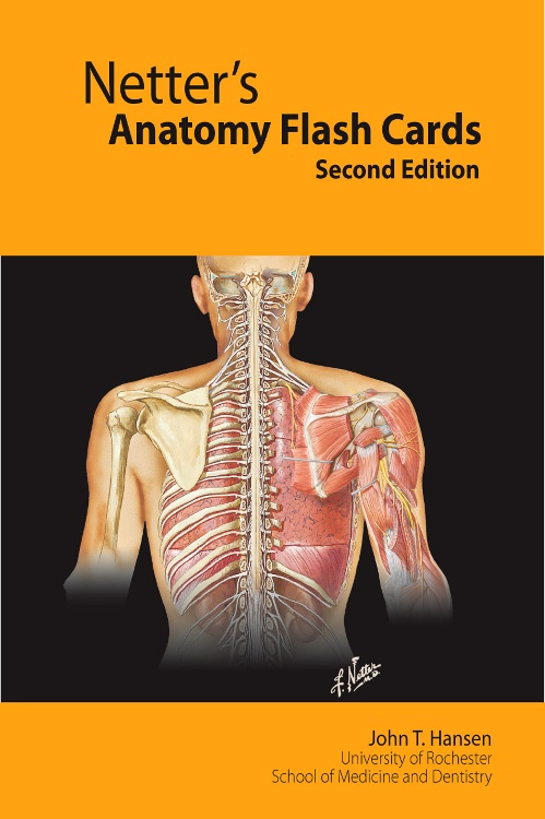 Human anatomy flash cards online free