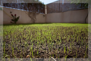 Welcome To Kaddi S World Wir Sehen Dem Rasen Beim Wachsen Zu