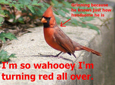 Repeating repeats Wahooey+cardinal