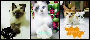 My BeLove Cat's
