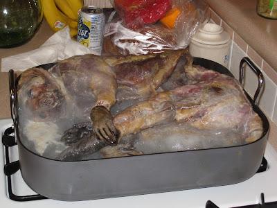 Can I Let Dog Inside After Eating Possum