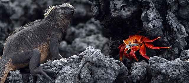 Birding Galapagos Islands