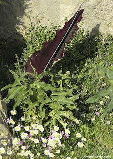 Bunga Paling Unik Di Dunia