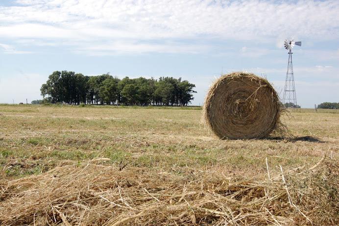 El paisaje de cosecha