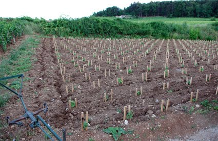 Charrue vigne equivinum quand plantation rime avec d compaction - Quand tailler une vigne ...