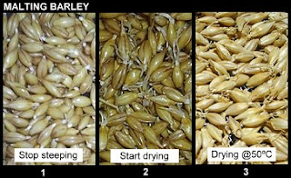 Basic Phases of Malting