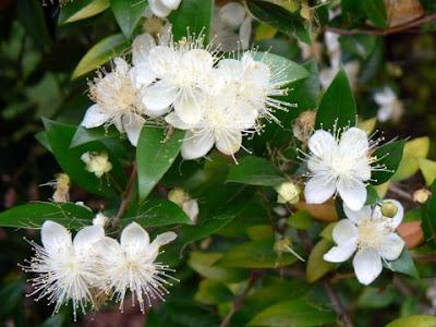 Flores Prantas e árvores exóticas com seus nomes YouTube - Imagens De Flores Com Seus Nomes