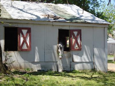 Woodland Horse Center: Horse