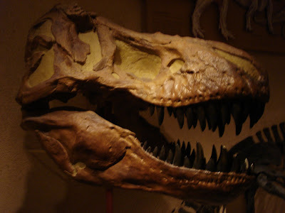 T-Rex skull