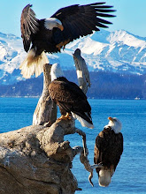 Eagles perch