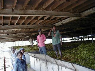 Tea factory in Papua New Guinea