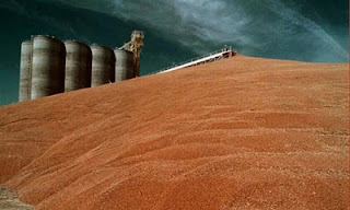 one quarter of US grain crops fed to cars - not people