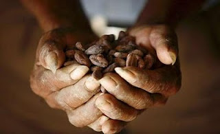 mystery trader buys all europe's cocoa