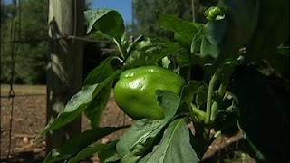 georgia county sues farmer for growing too much food