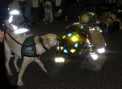 Reyna decides the firefighter wants to play with her as he lays on the ground and she does a play bow.