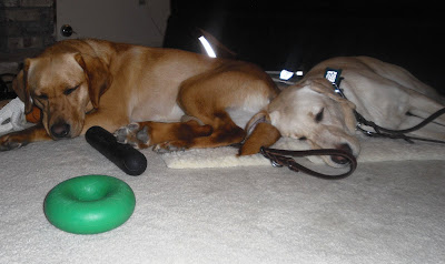 Reyna and Wendy all pooped out.  Both dogs are asleep right next to each other.