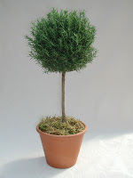 Rosemary Topiary