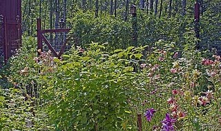 Alaskan Gardens