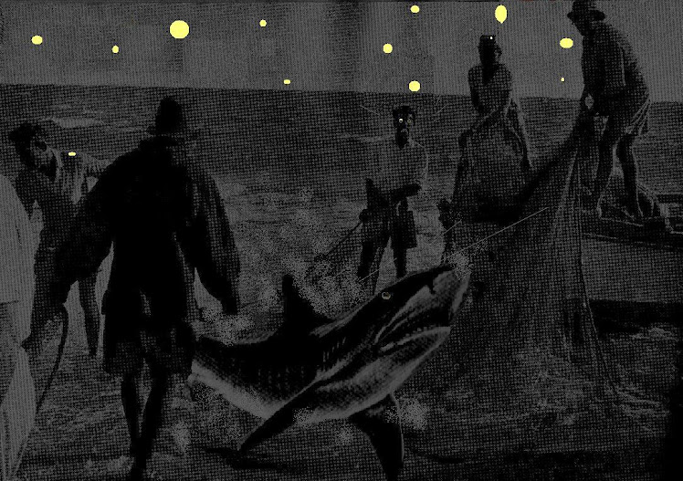 notte da squali