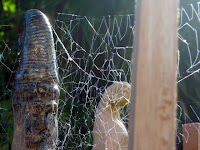 webs grow in the garden