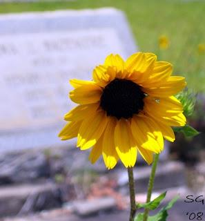 sardis sunflowers symbolism. Black Bedroom Furniture Sets. Home Design Ideas