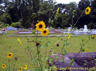 Sunflowers in the Cemetery