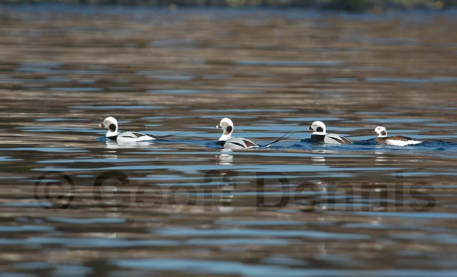 Rhode Island Seabirds