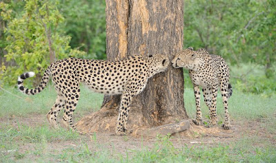 c4 images and safaris, greg du toit, photo tour, safari, shem compion