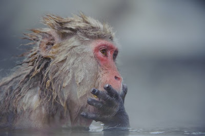 japan, shem compion, snow monkeys, japan photo tour