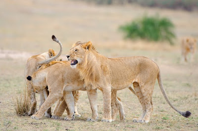c4 images and safaris, masai mara, photo tour