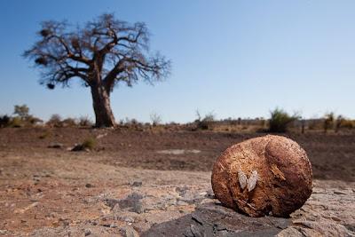 c4 images and safaris, isak pretorius, mashatu, photographic workshop, photography