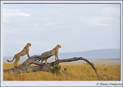 masai mara, shem compion, shemimages