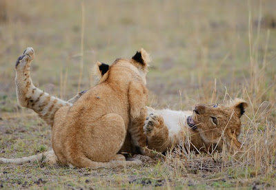c4 images and safaris, migration, photography
