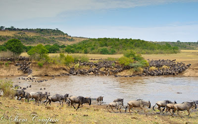 masai mara, shem compion, c4 images and safaris, 