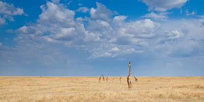 c4 images and safaris, masai mara photographic safari, wildlife photography, masai mara, isak pretorius,