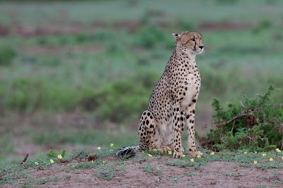 c4 images and safaris, photo workshop, mashatu, chiefs island,