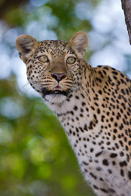 c4 images and safaris, photo workshop, chiefs island, safari,