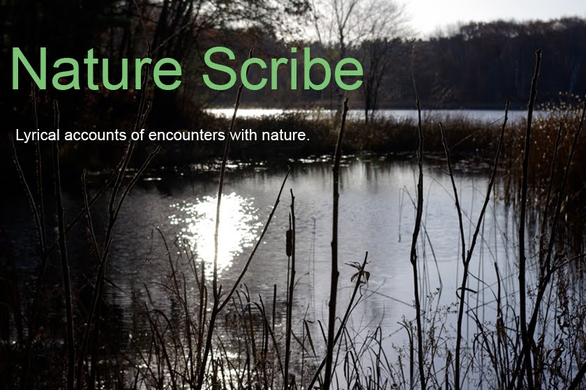 Nature Scribe